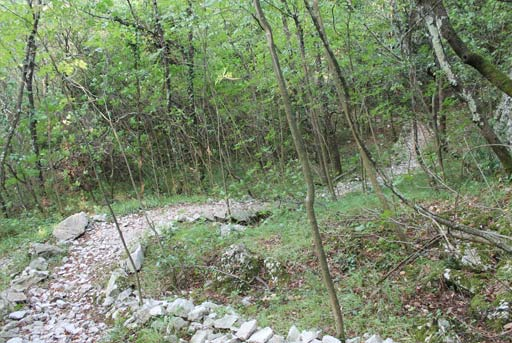 La curva di un sentiero nel bosco del carso